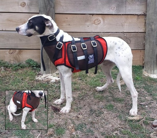 Dog Chest Plates For Sale